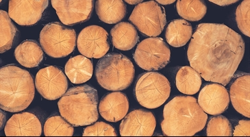 Why seeing the wood for the trees makes for sound business success